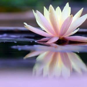 I-Let-Go-Meditation-Lotus-Flower-Image