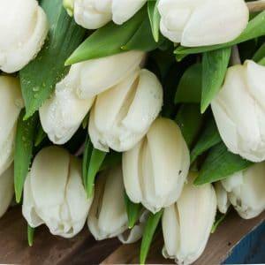 White Tulips Forgiveness Symbol