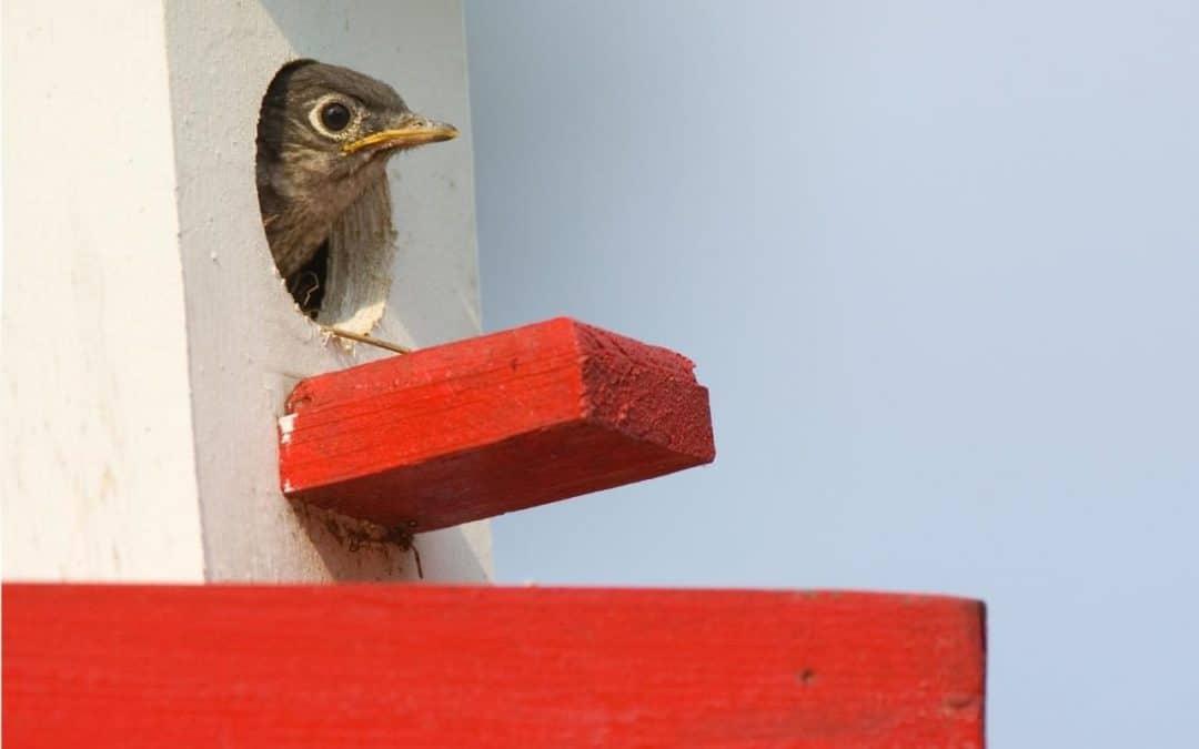 Confidence-Blog-Image-Bird-Peeking-Out